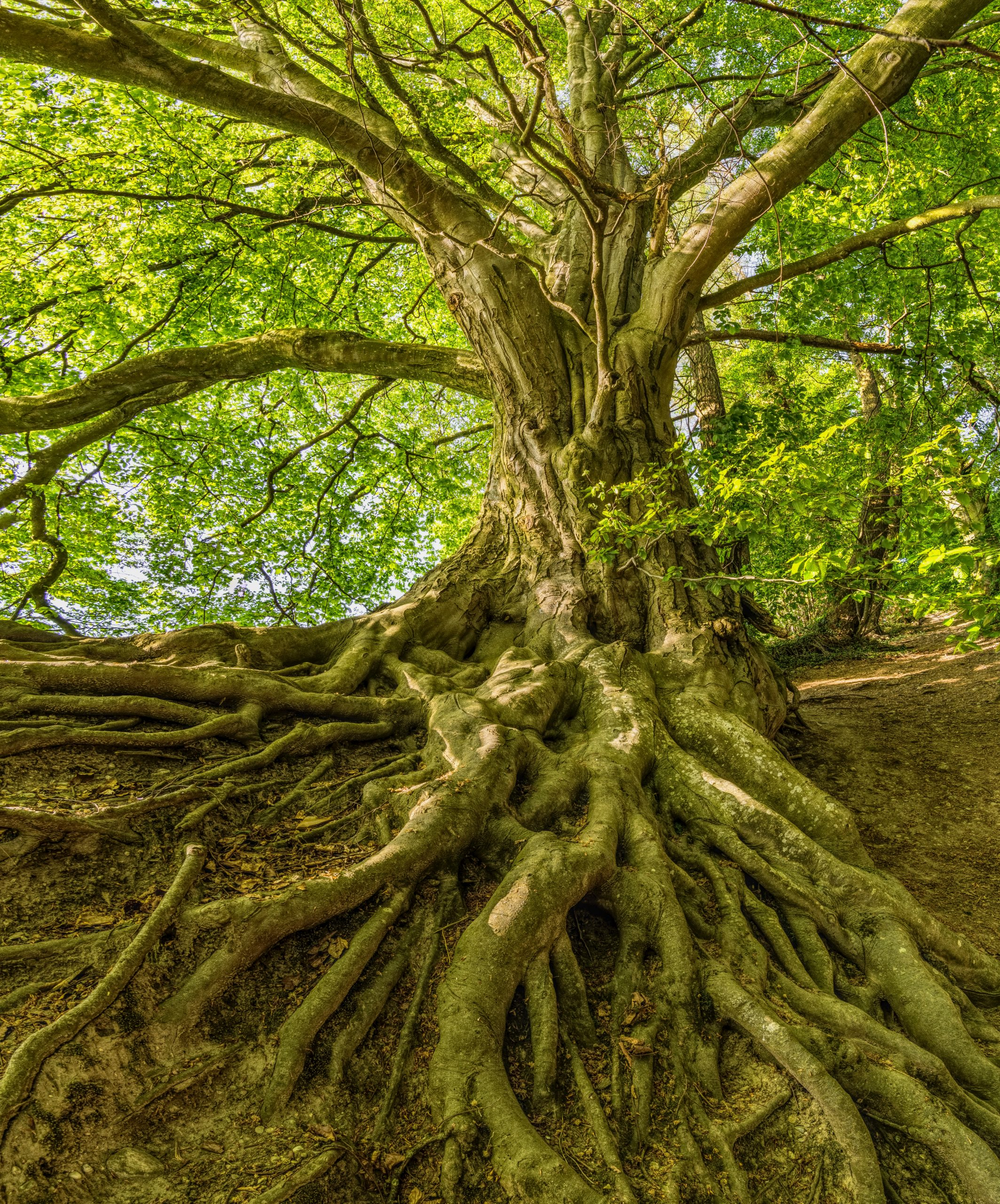 how much dna do humans share with trees