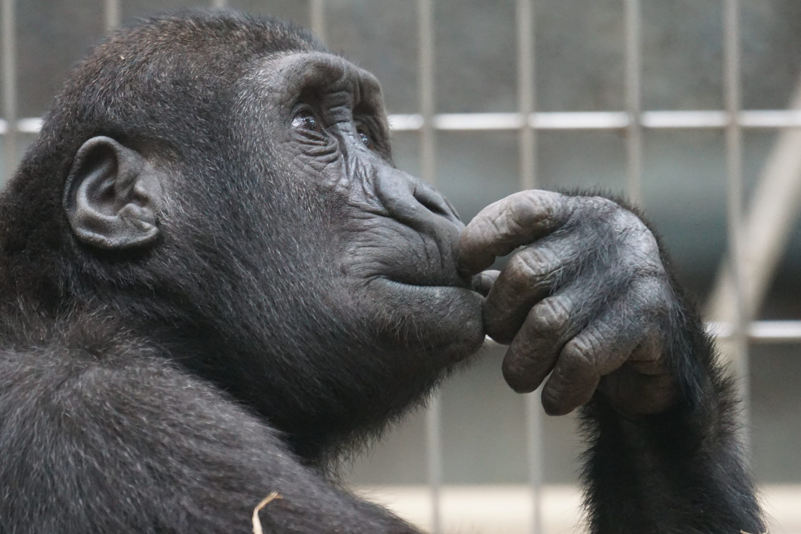 how much dna do we share with chimps